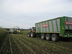 bergmann-silage-trailer-triaxle-maize-harvest