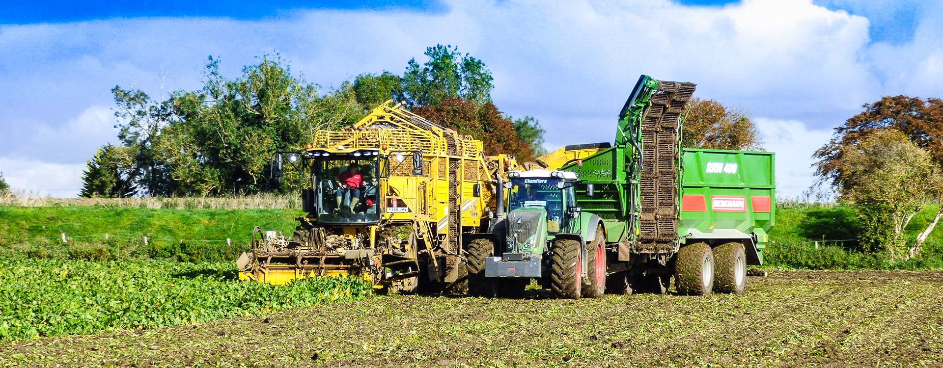 Sugar beet chaser trailer with ropa harvester