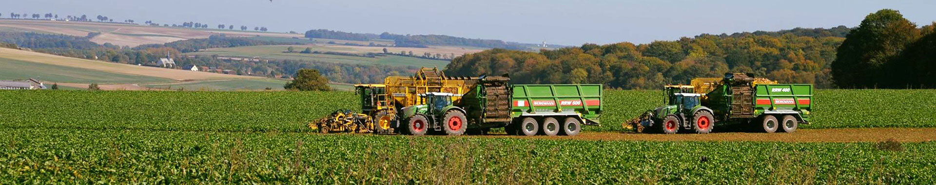 Sugar beet chasers working in field countryside beet harvest